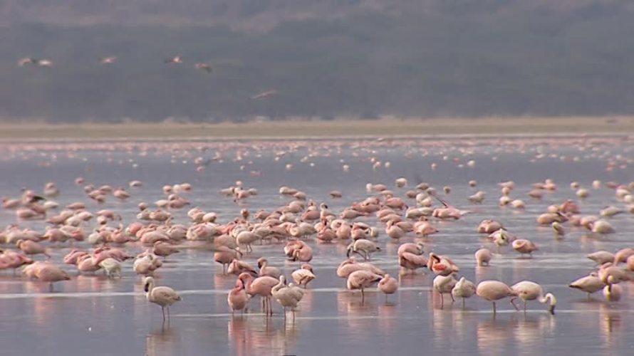Lake Nakuru in Kenya - Flamingos