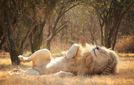 Lion Park In South Africa